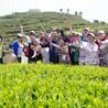 苏州西山农家乐采茶游包吃住超低价