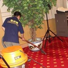 花都区地毯清洗地毯积水处理纯毛地毯干洗普通地毯清洗消毒