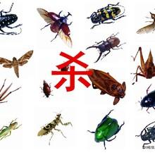 广州越秀区清洁公司专业提供室内消毒灭菌虫害消杀服务
