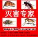 湘潭灭鼠养殖场灭老鼠宁乡灭鼠专用特效灭鼠用品批发