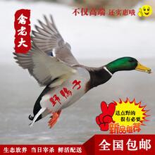 北京周边哪有卖野鸡肉野鸭肉的图片