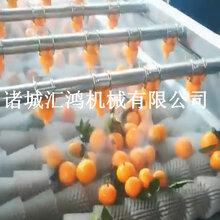 柠檬毛辊清洗机自动洗果机图片柑橘类清洗机厂家直销
