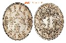 鉴定大清银币去哪里,找广州中艺图片