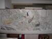 翰墨轩艺术画廊推荐山东著名画家小八尺精品花鸟画春光无限图