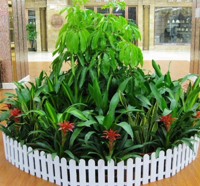 绵阳园林景观 03 绵阳植物养殖  肥肥农业科技公司提供植物租摆