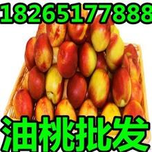 安徽优质大棚油桃什么价位图片