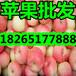 山东苹果批发嘎啦美八红富士苹果批发价格