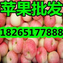山东苹果基地嘎啦苹果价格图片