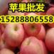 山东精品苹果价格嘎拉/美八苹果行情