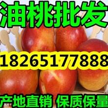 山东油桃今日油桃多钱一斤图片