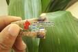 鄂州市华容区杨杂木颗粒燃料选购建议