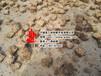 淮滨县木质颗粒燃料附近有卖