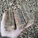 江苏常州秸秆压块多少钱一吨:免责声明