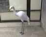 白鹭仿真模型真羽毛制作仿真白鹭制作各种尺寸可定制