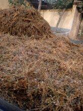 喂牛豆秸草粉供应价格大量销售