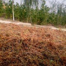 黄豆秸秆草料优质豆秸草粉批发价格
