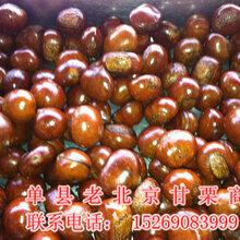 求購糖炒板栗價格山東糖炒板栗加盟圖片