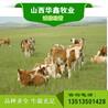 近期肉牛价格华鑫牧业
