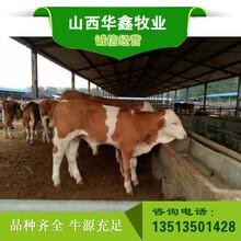 忻州肉牛价格签合同包回购
