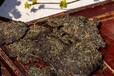 中国黑茶产业网:黑茶冲泡方法三大误区