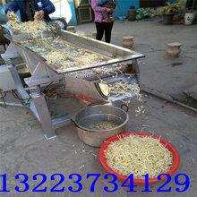hyf520不锈钢黄豆芽去皮机绿豆芽里浮皮清理筛豆芽脱壳机图片