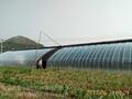 一亩地温室蔬菜大棚多少钱图片