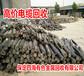 黑龙江牡丹江电缆回收行情报价