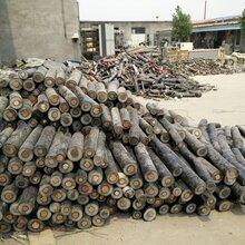 长垣电缆回收-长垣(各种)电缆回收价格快报图片