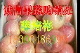 黄冈红星苹果2016又脆又甜又脆又甜