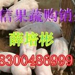 山东仔猪价格,山东仔猪介绍,山东仔猪价格行情2图片