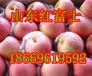 孝感红富士苹果又脆又甜产地最新价格