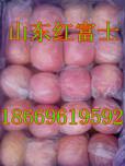 沈阳红富士苹果产地批发货源充足图片