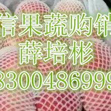 山东晨阳苹果产地在哪苹果批发供应价格图片