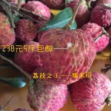 东莞新鲜桂味,糯米糍荔枝238元顺丰包邮图片