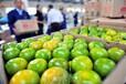 中國柑橘之鄉,----復興鄉,年產100萬噸.特早蜜桔上市