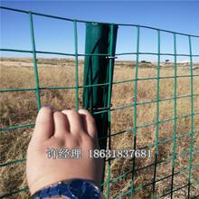 优质成卷铁丝荷兰网养鸡围栏网专用农业养殖护栏网