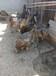 河南洛阳鸵鸟苗批发出售。