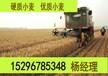 山西供应大量小麦,优质小麦供应