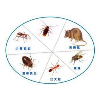 保定灭鼠灭蟑杀虫服务公司图片1