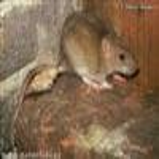 保定灭鼠灭蟑杀虫服务公司图片2