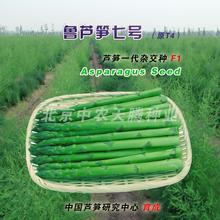 绿芦笋种子多少钱一斤高产绿芦笋种子北京中农天腾种业全国经销图片