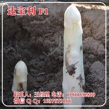 达宝利芦笋种子高产白芦笋种子进口白芦笋种子北京中农天腾种业全国经销图片