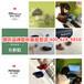 上海松江峰力B90助听器价格表哪里更划算/惠听助听器款式多