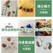 上海卢湾峰力钛斗助听器加盟/惠听招商加盟