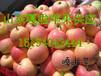 杭州红露苹果经销商又脆又甜