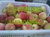 黄冈红星苹果好吃不贵又脆又甜