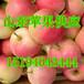 杭州红将军苹果脆生产基地红星苹果产地供应货源充足