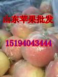 山东苹果价格,山东苹果介绍,山东苹果网图片