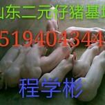肥东县仔猪最新行情最低优惠图片
