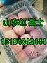今日山东红富士苹果价格走势图片